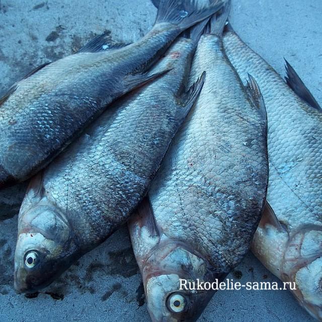 Озёрная рыба - лещ