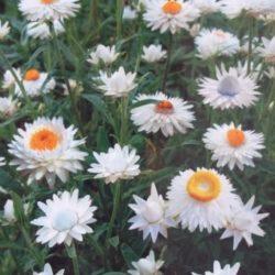 Зимний букет из сухоцветов, как высушить цветы