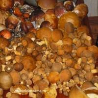 Соление грибов горячим способом